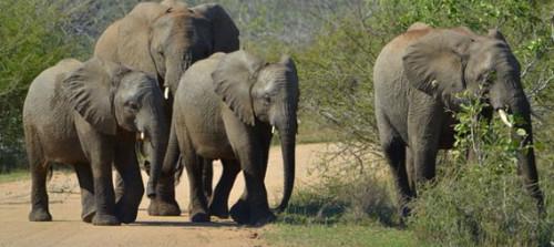 Kruger park developments