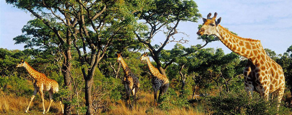 south-africa-game-reserve